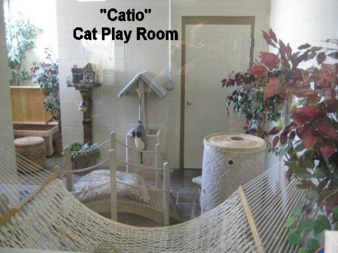 Top 20 Cat Hotels That Will Make You Purr